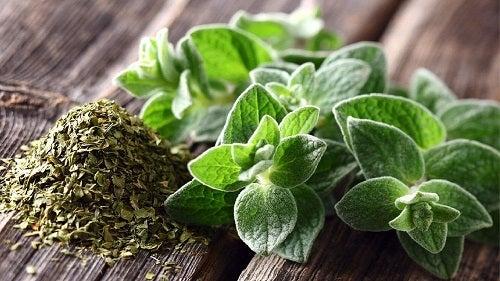 Plante medicinale împotriva tusei productive precum oregano