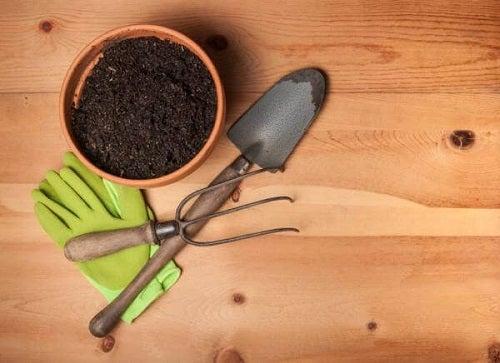 Plante ușor de cultivat în ghiveci