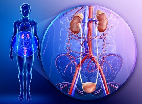 Beneficii ale pătrunjelului pentru rinichi precum detoxifierea acestora