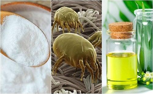 4 soluții naturale împotriva acarienilor din casă
