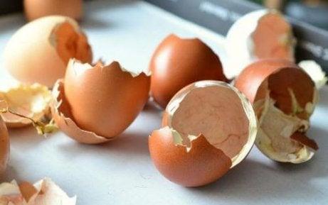 Coji de ouă folosite ca îngrășământ natural pentru plante