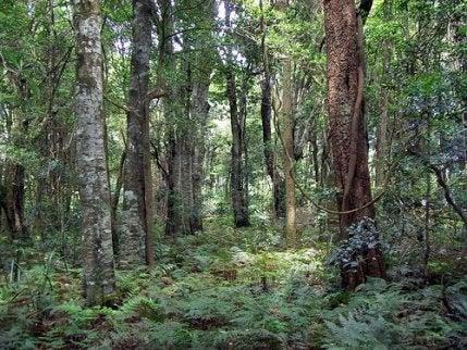Îngrășământ natural pentru plante cu cenușă de lemne