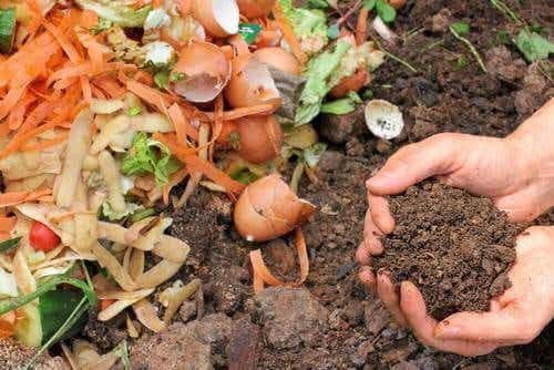 5 rețete de îngrășământ natural pentru plante