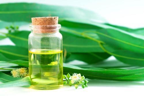 Remedii cu eucalipt sub formă de picături