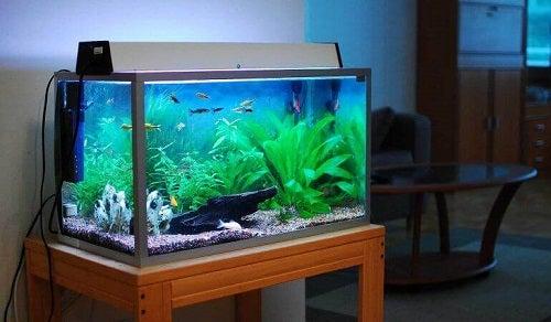 Cum să cureți acvariul fără să deranjezi peștii