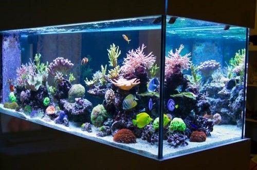 Cum să cureți acvariul cu plante în interior