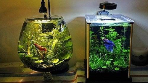 Cum să cureți acvariul peștilor în mod corect