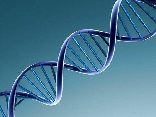 Gemenii identici și fraternali prezintă diferențe din punct de vedere genetic
