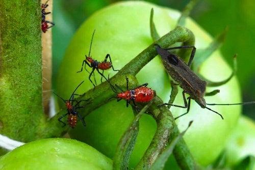5 soluții pentru exterminarea dăunătorilor