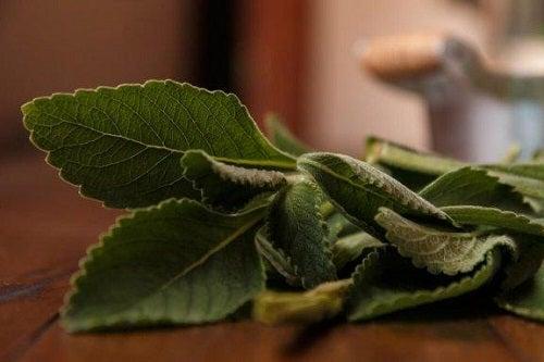 Remediu pentru ficat cu boldo 100% natural
