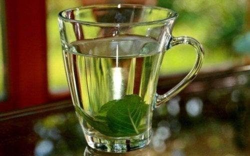 Ceai de busuioc pentru febră