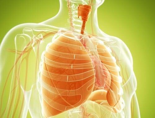 Remedii naturale pentru detoxifierea plămânilor