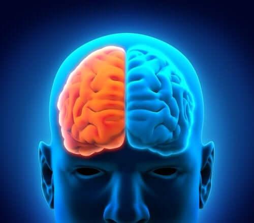 Depresia afectează creierul