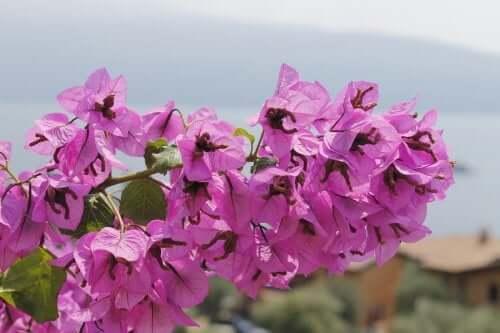 Floarea de hârtie cu flori roz