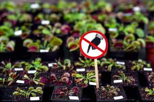 Plante periculoase pe care nu ar trebui să le ai acasă