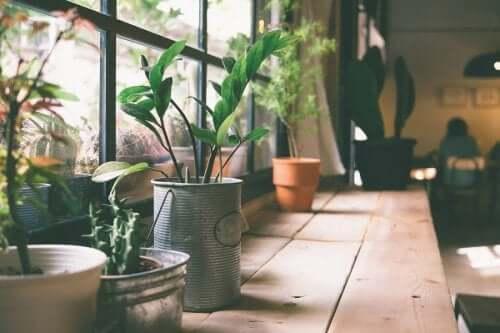 Ghivece de metal cu plante