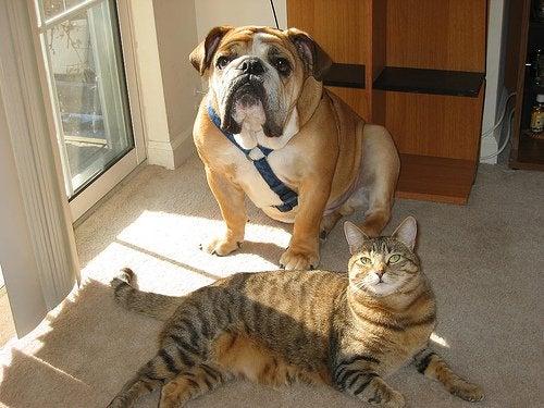 Beneficiile unui animal de companie la bloc