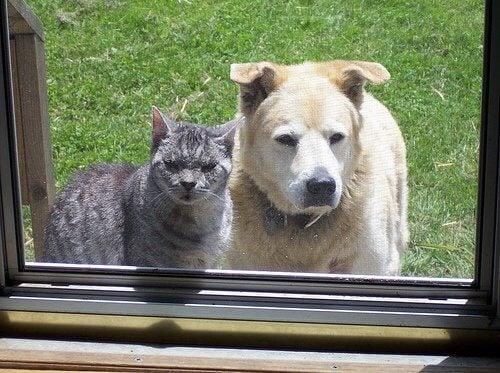 Câine și pisică la geam