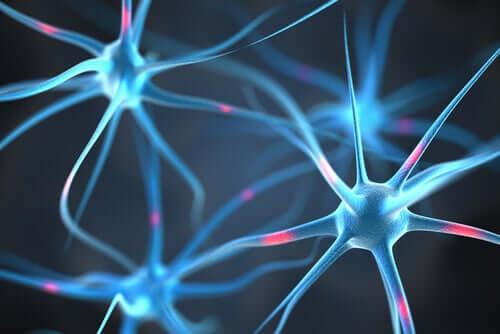 Conexiune sinaptică între neuroni