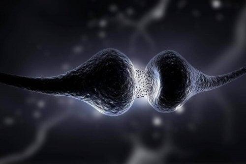 Capete de nervi care primesc semnale chimice