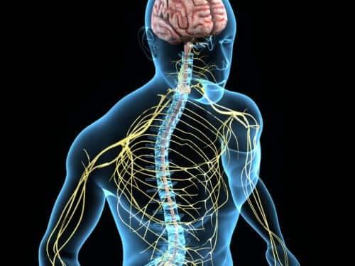Coloana vertebrală la om