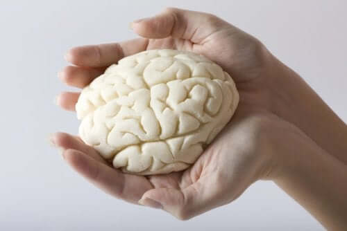 Creier ținut în palme