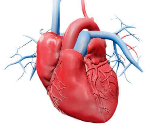 Inimă umană