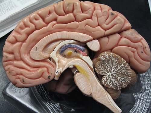 Hemoragiile subarahnoidiene și subdurale în creierul uman