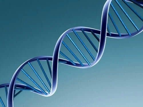 ADN prezent într-un virus
