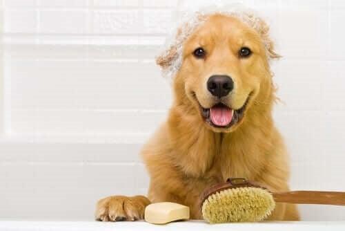 Trebuie să spălăm mai des câinii în timpul pandemiei?