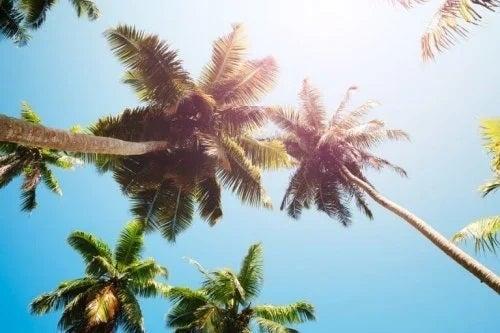 Cocotieri în soare