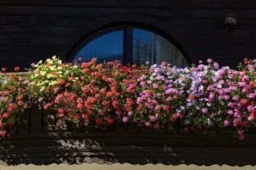 Flori parfumate pentru grădinile mici