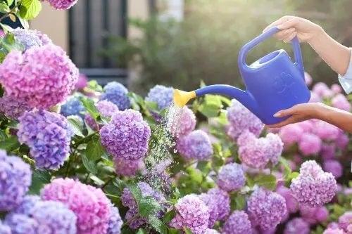 Flori parfumate pentru grădini mici