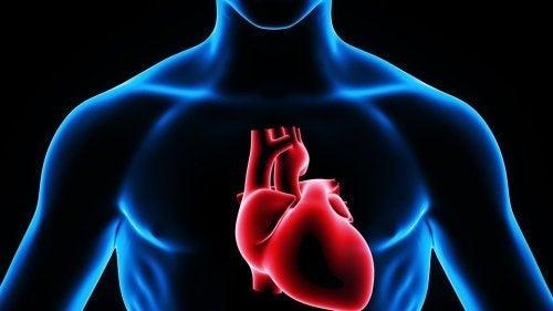 Inimă pompând sânge