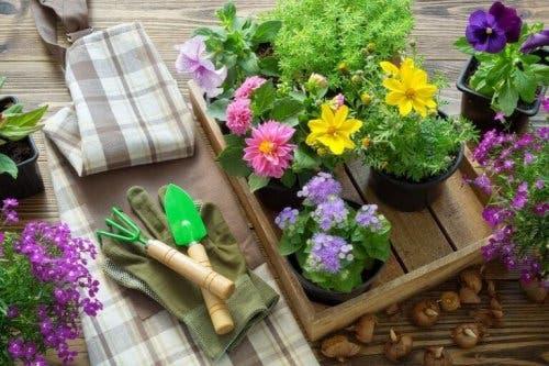 Materiale necesare pentru replantarea corectă a plantelor
