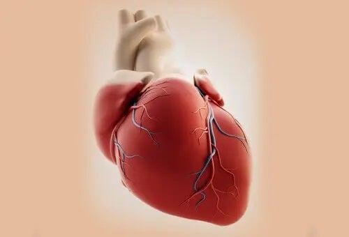 Cauzele trunchiului arterial comun