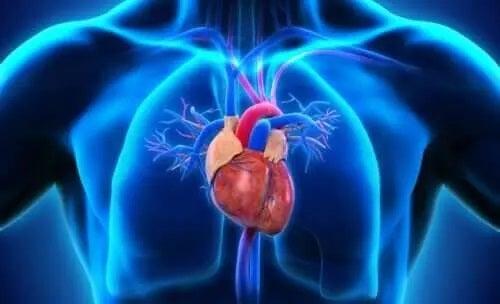 Inimă reprezentată în corpul uman