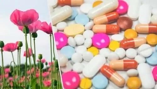 Ce sunt opioizii obținuți din maci