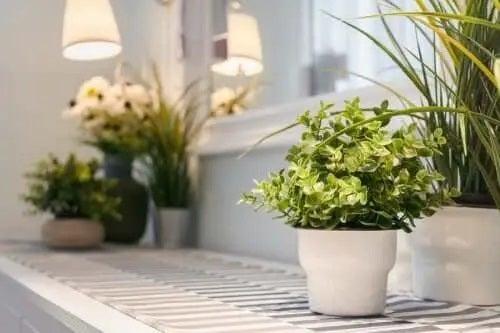 Ghivece cu plante de interior