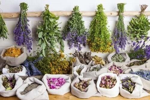 Care sunt beneficiile fitoterapiei?