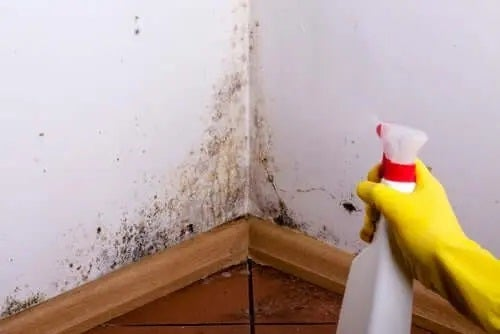 Curățarea mucegaiului cu degresant