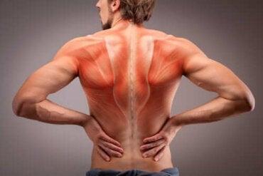 Anatomia mușchilor spatelui: informații esențiale