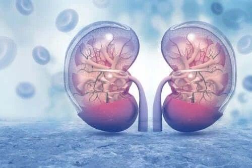 Efecte secundare ale Amlodipinei asupra rinichilor