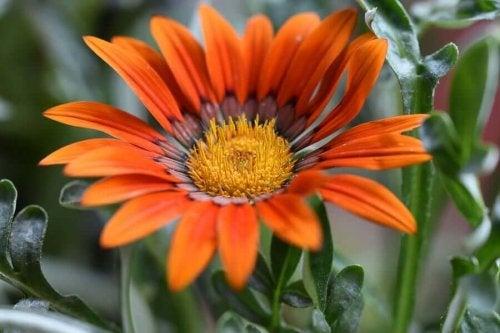 Flori de vară pentru grădină
