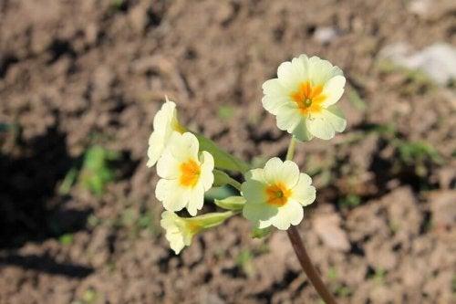 Flori de vară pentru grădină rezistente la căldură