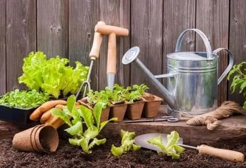 Cum să faci o grădină urbană într-un spațiu mic