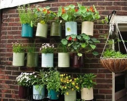 Plante în ghivece agățate pe perete