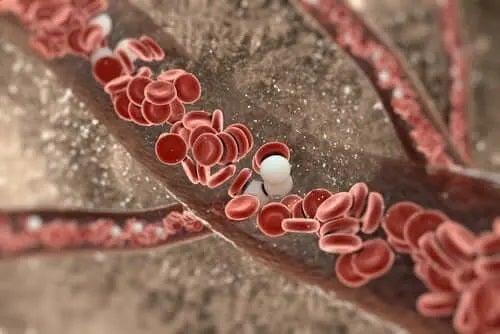 Vase de sânge