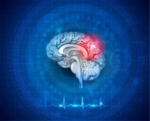 Creier uman reprezentat grafic