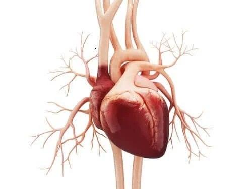 Inimă cu pericardită